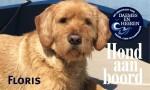 Floris Hond aan boord Daemes en Heeren Sloepenpost Sloep Honden aan boord Trouwe viervoeter