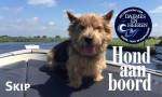 Skip Hond aan boord Daemes en Heeren Sloepenpost Sloep Honden aan boord trouwe viervoeter