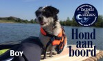 Boy Hond aan Boord Daemes en Heeren Sloepen Tender Cabins Sloepenpost Sloepenkaart Alles over sloepen Sloepenboekje Honden aan boord Trouwe viervoeters