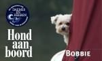 Bobbie Hond aan Boord Daemes en Heeren Sloepen Tender Cabins Sloepenpost Sloepenkaart Alles over sloepen Sloepenboekje Honden aan boord Trouwe viervoeters