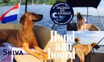 Shiva Hond aan Boord Daemes en Heeren Sloepen Tender Cabins Sloepenpost Sloepenkaart Alles over sloepen Sloepenboekje Honden aan boord Trouwe viervoeters