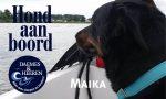 Ted Hond aan Boord Daemes en Heeren Sloepen Tender Cabins Sloepenpost Sloepenkaart Alles over sloepen Sloepenboekje Honden aan boord Trouwe viervoeters