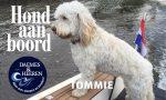 Tommie Hond aan Boord Daemes en Heeren Sloepen Tender Cabins Sloepenpost Sloepenkaart Alles over sloepen Sloepenboekje Honden aan boord Trouwe viervoeters