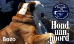 Bozo Hond aan boord Daemes en Heeren Sloepenpost Sloep Honden aan boord trouwe viervoeter
