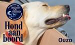 Ouzo Hond aan boord Daemes en Heeren Sloepenpost Sloep Honden aan boord Trouwe viervoeter