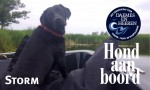 Storm Hond aan boord Daemes en Heeren Sloepenpost Sloep Verschuur Watersport Honden aan boord Trouwe viervoeter