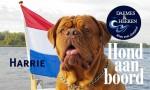Harrie Hond aan Boord Daemes en Heeren Sloepen Tender Cabins Sloepenpost Sloepenkaart Alles over sloepen Sloepenboekje Honden aan boord Trouwe viervoeters