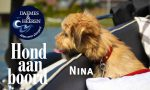 Nina Hond aan Boord Daemes en Heeren Sloepen Tender Cabins Sloepenpost Sloepenkaart Alles over sloepen Sloepenboekje Honden aan boord Trouwe viervoeters