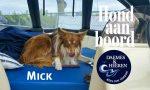 Mick Hond aan Boord Daemes en Heeren Sloepen Tender Cabins Sloepenpost Sloepenkaart Alles over sloepen Sloepenboekje Honden aan boord Trouwe viervoeters