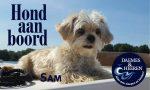Sam Hond aan Boord Daemes en Heeren Sloepen Tender Cabins Sloepenpost Sloepenkaart Alles over sloepen Sloepenboekje Honden aan boord Trouwe viervoeters