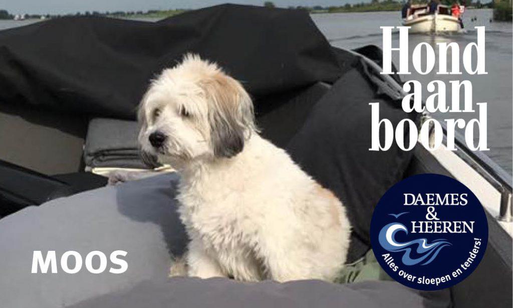 Moos Hond aan Boord Daemes en Heeren Sloepen Tender Cabins Sloepenpost Sloepenkaart Alles over sloepen Sloepenboekje Honden aan boord Trouwe viervoeters