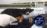 Soof Hond aan Boord Daemes en Heeren Sloepen Tender Cabins Sloepenpost Sloepenkaart Alles over sloepen Sloepenboekje Honden aan boord Trouwe viervoeters